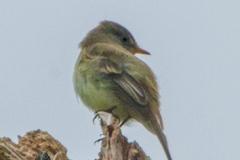 MG_8510-Mystery-Bird